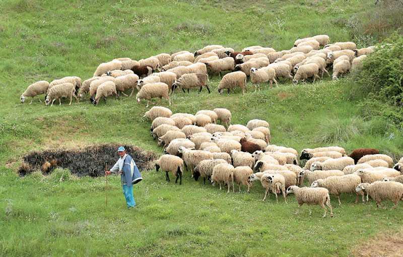 ΠΑΣΥ - Γραμματεία Κοζάνης: Κάλεσμα στους κτηνοτρόφους του νομού για αγωνιστικές κινητοποιήσεις