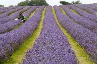 Θέμης Μουμουλίδης: «Συγκροτήθηκε από το Υπουργείο Αγροτικής Ανάπτυξης, η επιτροπή [ομάδα εργασίας] υποστήριξης καλλιέργειας αρωματικών και φαρμακευτικών φυτών. Μέχρι τέλος Νοεμβρίου θα ανακοινωθούν τα κριτήρια επιλογής των δικαιούχων ανέργων και νέων αγροτών»
