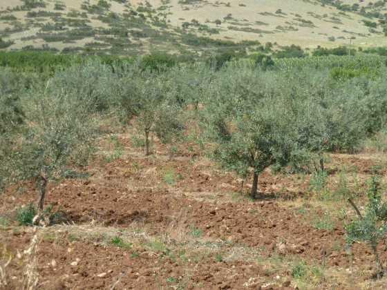 Έως 9.000 ευρώ εφάπαξ επιδότηση για φύτευση δένδρων δικαιούνται με το νέο ΕΣΠA οι αγρότες, που στρέφονται στην καλλιέργεια οπωροφόρων δένδρων