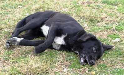 Mηνύσεις κατά παντός υπευθύνου από το δήμο Κοζάνης για τη δηλητηρίαση αδέσποτων ζώων  στη Μεταμόρφωση, Λευκόβρυση, Καπνοχώρι
