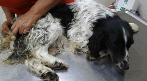 Άγρια κακοποίηση αδέσποτης σκυλίτσας στην Πτολεμαΐδα