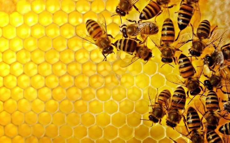 Υλοποίηση των δράσεων του μελισσοκομικού προγράμματος για τη βελτίωση των γενικών συνθηκών παραγωγής και εμπορίας των προϊόντων μελισσοκομίας για το έτος 2017