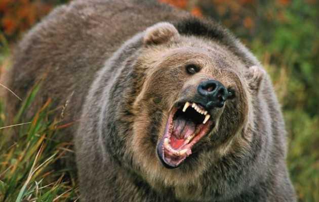 Αρκούδα επιτέθηκε και τραυμάτισε 54χρονο από το Σταυροδρόμι Βοΐου – Νοσηλεύεται στο Νοσοκομείο Kαστοριάς
