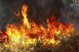 Τρείς διαδοχικές εστίες φωτιάς προκάλεσε Αλβανός υπήκοος στην περιοχή Ψαράδων Πρεσπών