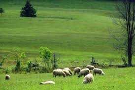 Χορήγηση εντύπων τελών βοσκής έτους 2016 στους κτηνοτρόφους του δήμου Κοζάνης