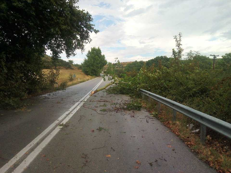 Πτώση δέντρου στον επαρχιακό δρόμο Κοζάνης Αιανής (Από το προσωπικό προφίλ Facebook του Τσιομπάνου Ιωάννη)