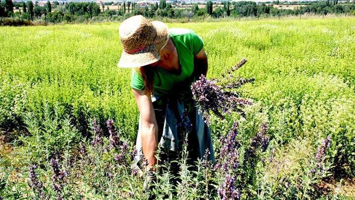 Συγκροτείται Ομάδα Εργασίας για την υποστήριξη της προωθούμενης καλλιέργειας αρωματικών & φαρμακευτικών φυτών στην Περιφέρεια Δυτικής Μακεδονίας