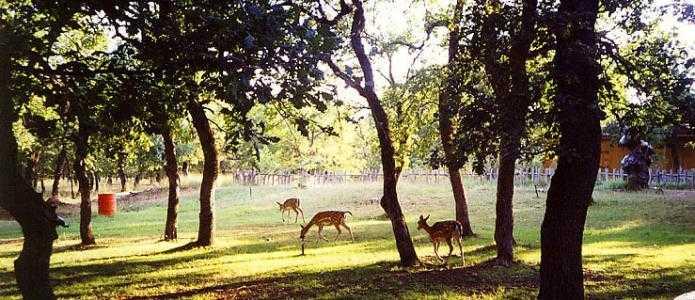1.870.000,00€ στο δάσος ΚΟΥΡΙ.  Δασοτεχνικά έργα ∆ασικής Αναψυχής, Άθλησης & Περιβαλλοντικής Ενηµέρωσης. Τι περιλαμβάνει η μελέτη