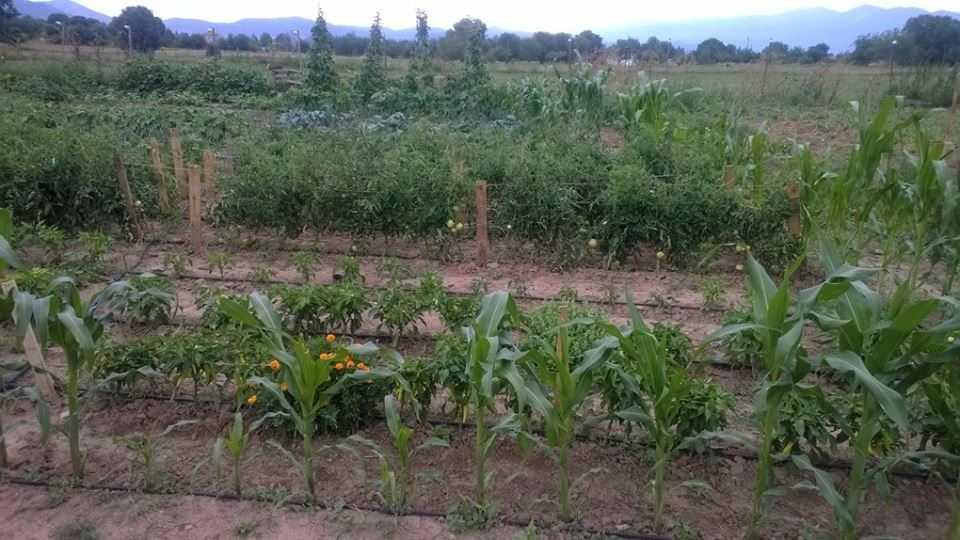 Τα μέλη του Περιαστικού Λαχανόκηπου Κοζάνης στηρίζουν το Συσσίτιο Απόρων Δημοτών