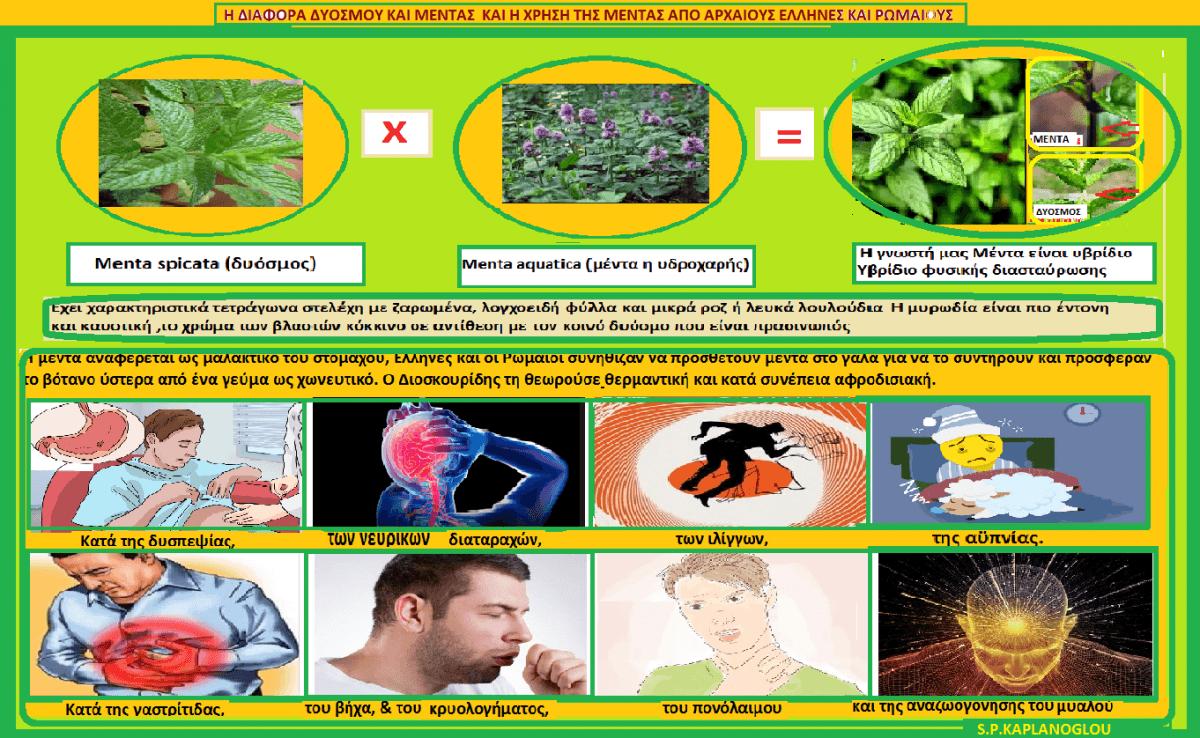 Μέντα -Μίνθη – Mentha Καλλιέργεια και ιατροφαρμακευτικές ιδιότητες