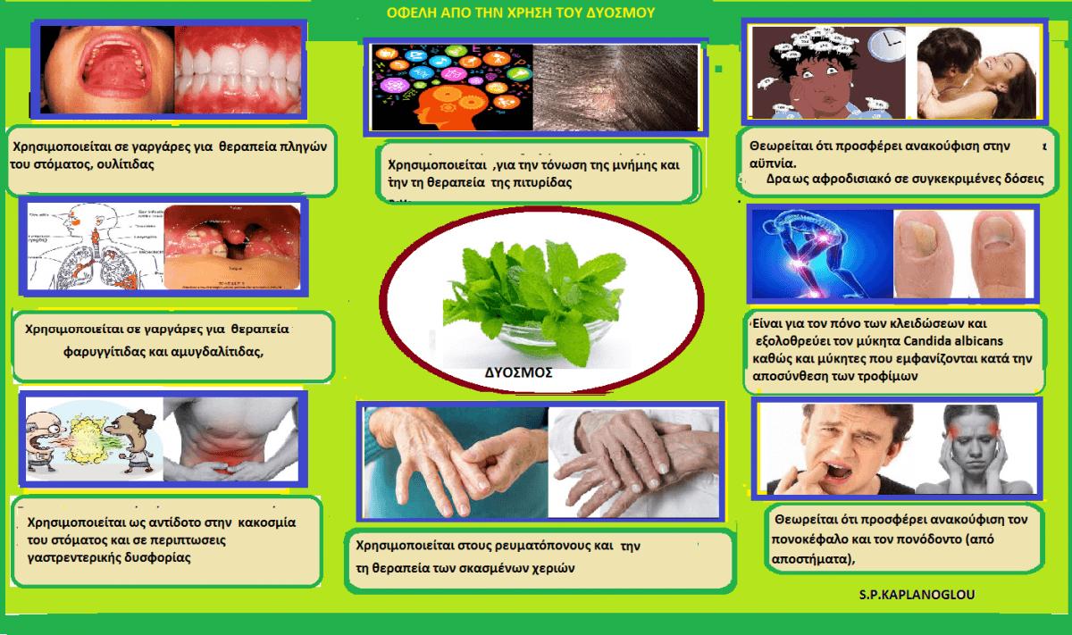 ΔΥΟΣΜΟΣ- Mentha spicata L Καλλιέργεια και ιατροφαρμακευτικές ιδιότητές Σταύρου Π. Καπλανογλου Γεωπόνου