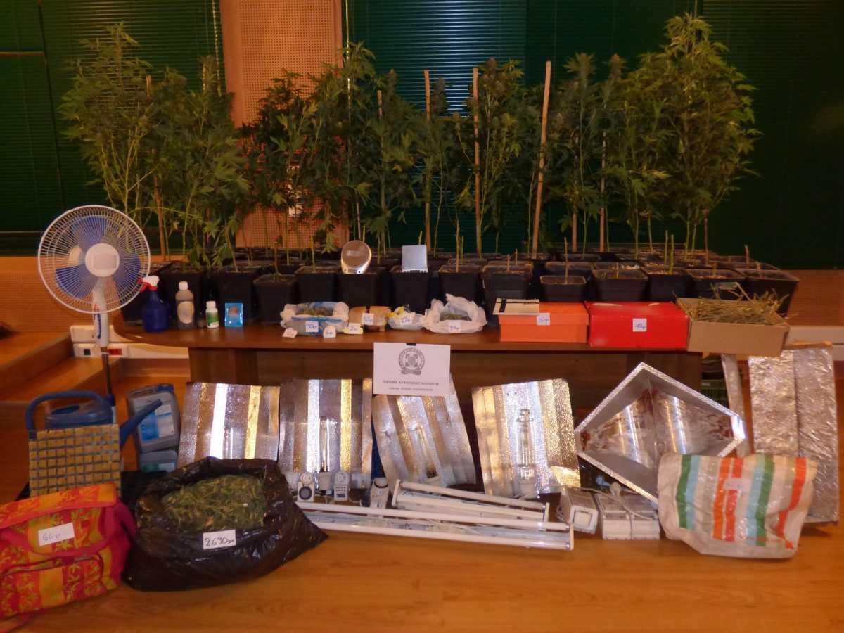 Συνελήφθη 37χρονος στην Κοζάνη για καλλιέργεια -30- δενδρύλλιων κάνναβης. Εγκατέστησε στο σπίτι του διαμορφωμένο εργαστήριο υδροπονικής καλλιέργειας δενδρυλλίων κάνναβης. Κατείχε και 3 κιλά και 282 γραμ. κάνναβης