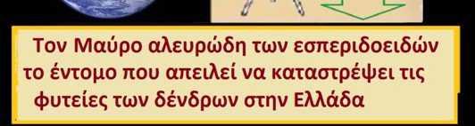 Εμφανίσθηκε και στην Ελλάδα ο Μαύρος Ακανθώδης Αλευρώδης. ΣΟΒΑΡΗ ΑΠΕΙΛΗ ΓΙΑ ΜΕΓΑΛΗ ΚΑΤΑΣΤΡΟΦΗ ΣΤΑ ΕΣΠΕΡΙΔΟΕΙΔΗ & ΑΛΛΕΣ ΚΑΛΛΙΕΡΓΕΙΕΣ ;