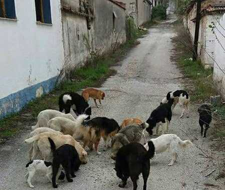 Τόπος εξορίας για τα 50 περίπου αδέσποτα σκυλιά η Μαυροπηγή!  Οι κάτοικοι έφυγαν απ' το χωριό μα τα αδέσποτα έμειναν, σαν ανάμνηση της Μαυροπηγής που κάποτε υπήρξε ένα ζωντανό κεφαλοχώρι της Εορδαίας.  Συγκινητική η πρωτοβουλία της Αλεξίας Χασάπη, να πηγαινοέρχεται στο χωριό για να ταΐσει και να περιθάλψει τα σκυλάκια που αντιστέκονται στην ερημοποίηση του χωριού! ΕΚΚΛΗΣΗ ΓΙΑ ΒΟΗΘΕΙΑ