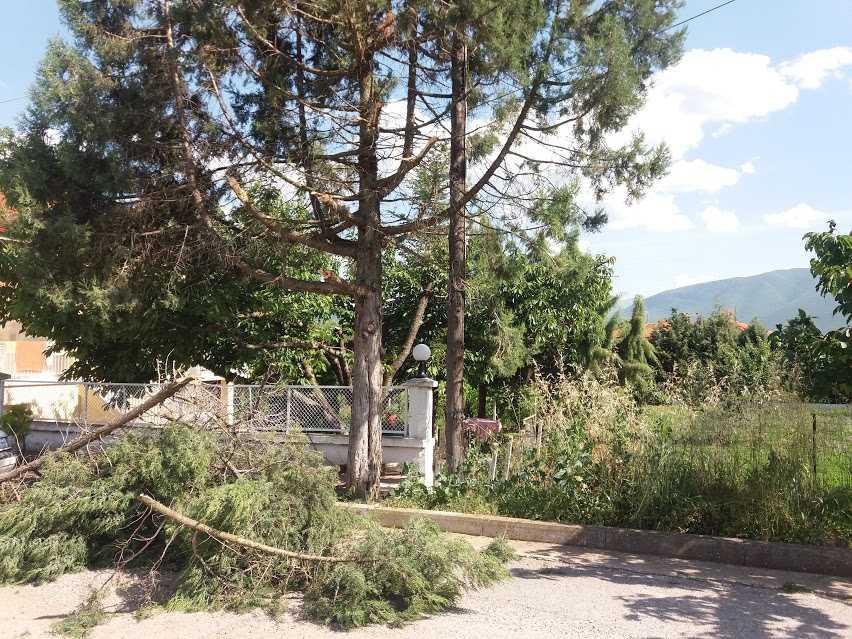 Ανώνυμη καταγγελία αναγνώστη Ξηρολίμνη Κοζάνης: «Κατέστρεψαν» τα δέντρα του χωριού με το κλάδεμά τους.