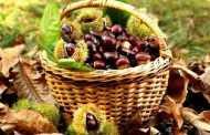 «8η Γιορτή Κάστανου» στο Εμπόριο από το Σύλλογο Γυναικών του χωριού
