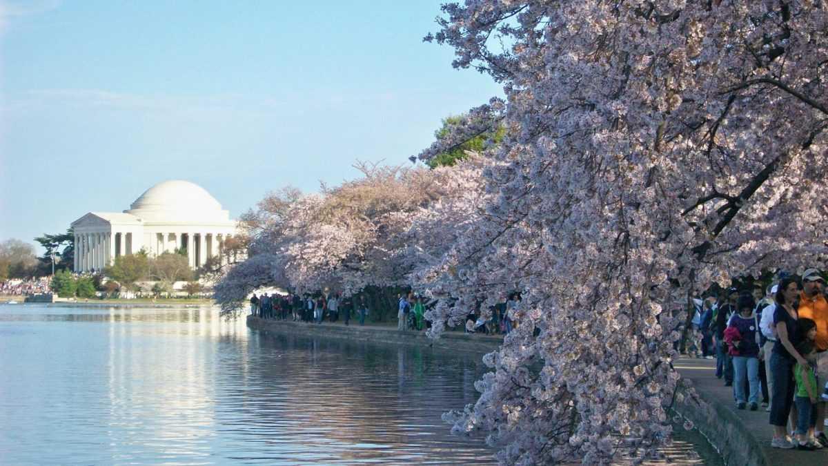 Απ' τις αμυγδαλιές της Πτολεμαΐδας στις κερασιές της Ουάσιγκτον: ο πλανήτης