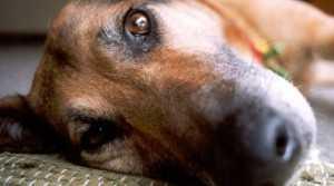 Schauen Sie nicht weg! Glauben Sie, dass ein Tier das mochte? Tiere konnen nicht NEIN sagen- WIR tun es!
