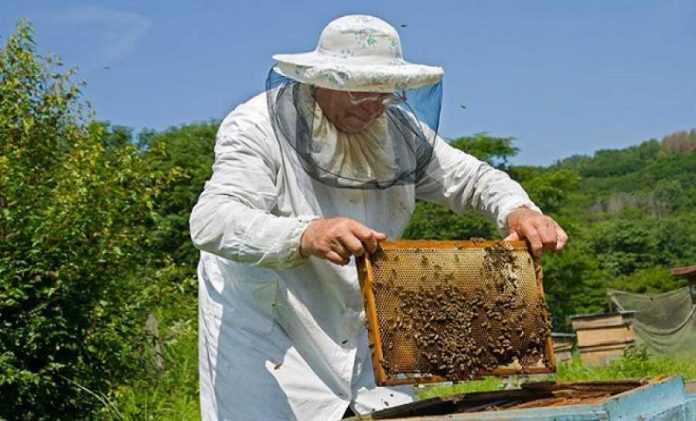 Υποβολή αιτήσεων για Κυψέλες Διαχείμασης μελισσιών