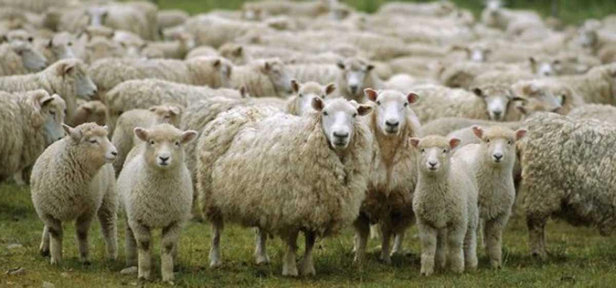 Έχουν αναρτηθεί οι καταστάσεις πληρωμής Βιολογικής Κτηνοτροφίας έτους 2015