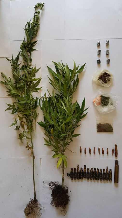 Συνελήφθη 49χρονος για καλλιέργεια και κατοχή ναρκωτικών στα Γρεβενά