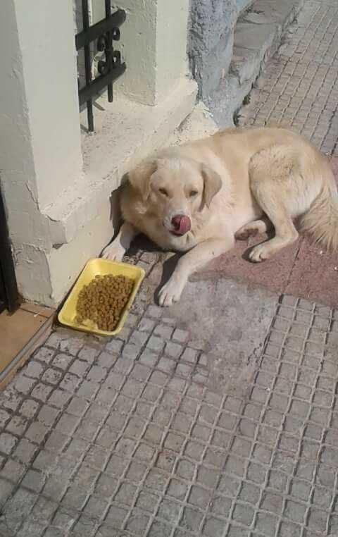 Ανησυχία από φόλες στην περιοχή της Αγίας Παρασκευής (Θεατροδρόμιο) και δηλητηριασμένα σκυλάκια (στα ίχνη των δραστών ζωόφιλοι της περιοχής)