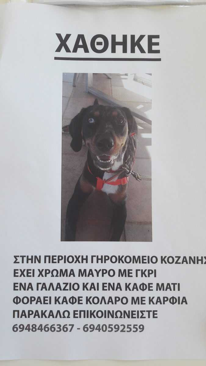 Χάθηκε ημίαιμο σκυκάλι στην περιοχή Γηροκομείου Κοζάνης