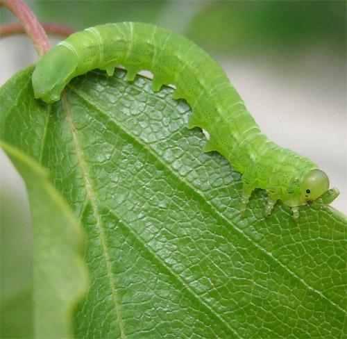 Επικίνδυνο για την δημόσια υγεία το φυτοπροστατευτικό προϊόν (ζιζανιοκτόνο) PENCO. T 33EC. Ανάκληση άδειας διάθεσης.