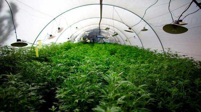 Πρόσκληση για την υποβολή αιτήσεων στήριξης στο πλαίσιο  του Μέτρου 11 «Βιολογικές καλλιέργειες» του Προγράμματος Αγροτικής Ανάπτυξης