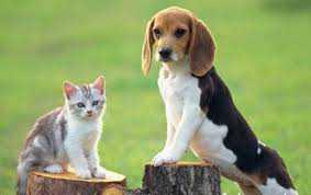 Να αποσυρθεί ΤΩΡΑ  το απαράδεκτο νομοσχέδιο για τα Ζώα Συντροφιάς