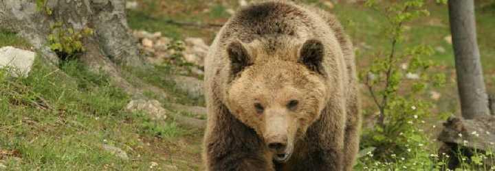 Εντοπισμός παγιδευμένης αρκούδας σε δασική περιοχή της Τ.Κ. Ροδίτη  του Δήμου Σερβίων