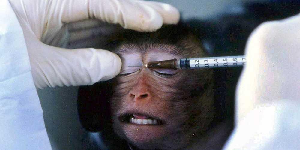 ΠΕΙΡΑΜΑΤΑ ΣΤΑ ΖΩΑ Επιστήμη ή Σαδισμος; Δείτε πως υποφέρουν τα ζώα στα χέρια των ερευνητών
