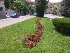 Αισθητικές παρεμβάσεις με φύτευση λουλουδιών σε πολλά σημεία της Κοζάνης