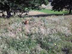 Επέστρεψε στο φυσικό του περιβάλλον το νεαρό ζαρκάδι  που είχε εντοπιστεί στο Κλειδί του Δήμου Αμυνταίου