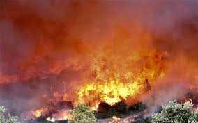 Προληπτικά μέτρα για δασικές πυρκαγιές. Ενημέρωση από το δήμο Κοζάνης