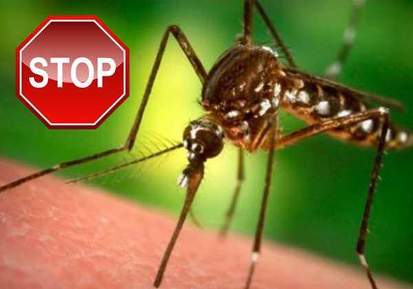 Πώς να προστατευτείτε από τα κουνούπια και απο τις ασθένειες που μεταδίδουν