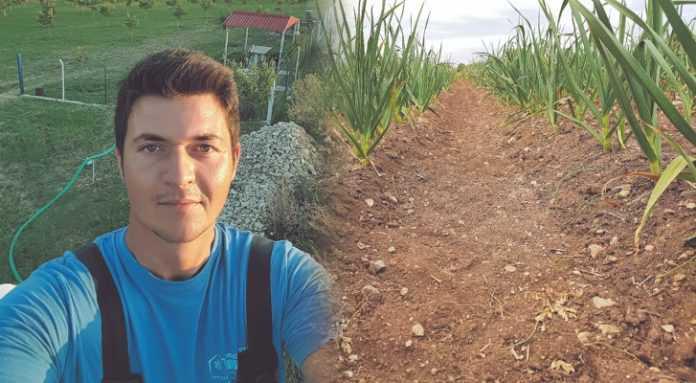 Η συμβολή του Ισαάκ Κυπάρογλου στα Πετρανά Κοζάνης, που άλλαξε τη συνολική καλλιέργεια του σκόρδου