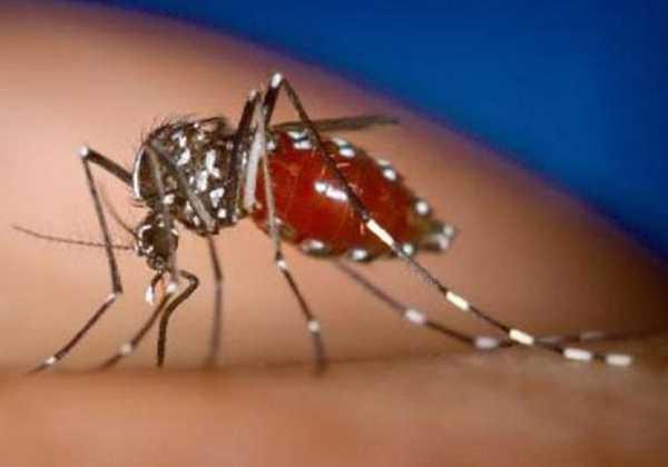 Δύο ακόμη κρούσματα του ιού του Δυτικού Νείλου καταγράφηκαν στην βόρεια Ελλάδα