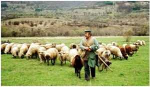 Πρόβατα και αίγες. Μελέτη του κτηνοτροφικού δυναμικού της πατρίδας μας από τον Αντώνη Καλόγηρο  Οικονομολόγο