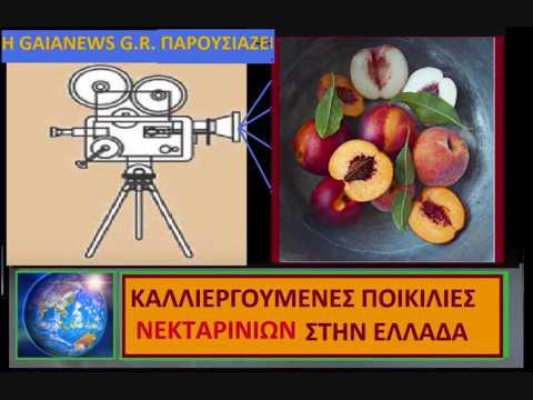 ΝΕΚΤΑΡΙΝΙΑ ΜΕΡΙΚΕΣ ΑΠΟ ΤΙΣ ΠΙΟ ΕΝΔΙΑΦΕΡΟΥΣΕΣ ΠΟΙΚΙΛΙΕΣ (video )  Μάρθα Στ.Καπλάνογλου Τεχνολόγος Γεωπόνος
