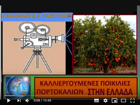 Πορτοκαλιά - (επιστ. Κιτρέα η σινική, Citrus × sinensis). Ενδιαφέρουσες ποικιλίες (Μάρθα Στ. Καπλάνογλου Γεωπόνος -Τεχνολόγος)