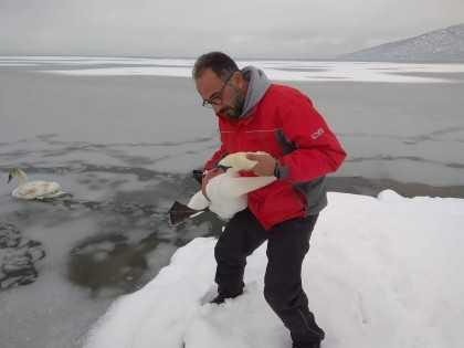 Εθελοντές αψηφούν τον κίνδυνο για να σώσουν παγιδευμένα πουλιά στην παγωμένη λίμνη της Καστοριάς