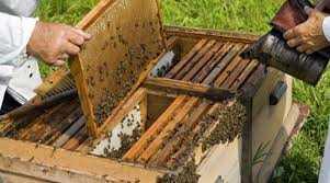 Πρόσκληση σε μελισσοκόμους για τοποθέτηση κυψελών σε προεπιλεγμένες θέσεις σε αποκατεστημένες εκτάσεις του ΛΚΔΜ
