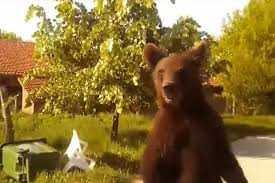 Εμφάνιση αρκούδας στην περιοχή Νιάημερος-Αηλιόστρατα-Αρίνταγας. Άμεση εφαρμογή διαχειριστικών μέτρων