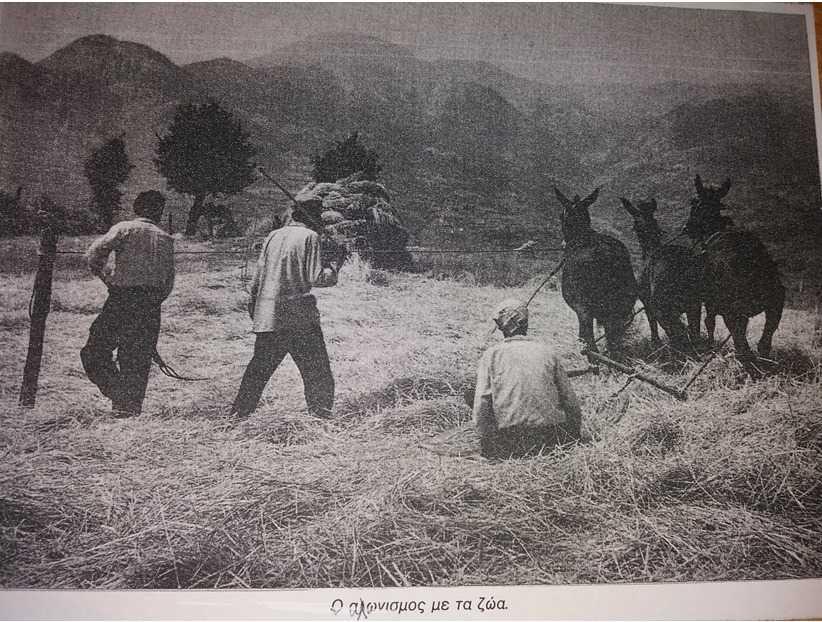 Τα αλώνια στο χώρο των χωραφιών και στις ράχες του χωριού μας (Μεταξά) κι ο αλωνισμός, όπως παλιά!!!