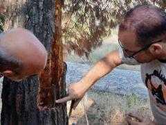 Φλοιοφάγα έντομα έχουν καταλάβει περίπου το 10% του δάσους της ευρύτερης περιοχής του Κάστρου Σερβίων. Αυτοψία κλιμακίου Δασολόγων που επισκέφθηκαν το λόφο
