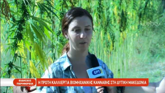 Η πρώτη βιομηχανική κάνναβη στη Δυτική Μακεδονία καλλιεργείται στα Σέρβια