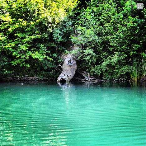 Η Τεχνητή Λίμνη Βυθού – Ένας Νέος Υδροβιότοπος