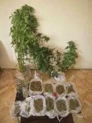 Δενδρύλλια κάνναβης καλλιεργούσε στην οικία του και γύρω απ΄αυτήν 47χρονος στα Γρεβενά