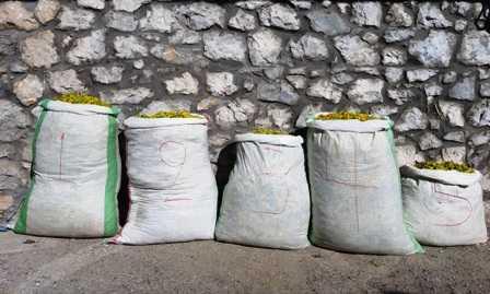 Σύλληψη τεσσάρων αλλοδαπών, σε περιοχή του ορεινού όγκου της Καστοριάς, για παράνομη συλλογή ποσότητας αρωματικού-θεραπευτικού φυτού. Είχαν συλλέξει από περιοχή του Γράμμου Καστοριάς ποσότητα αρωματικού-θεραπευτικού φυτού, συνολικού βάρους 120 κιλών